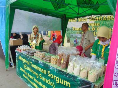 HIMPPI Bawa Sorgum Sebagai Produck Unggulannya di Expo 2018, Cipasung Tasikmalaya