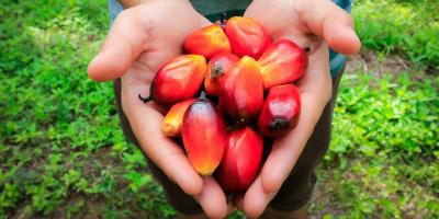 Presidential Decree on ISPO 2018, Towards Sustainable Palm Oil in Indonesia