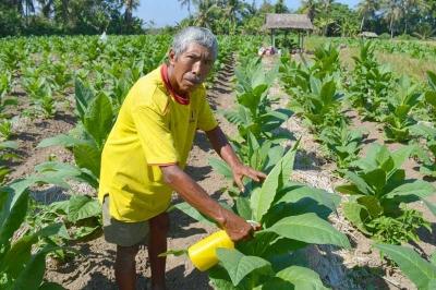 Ketut Narka, Petani Tembakau Terakhir di Sukawati