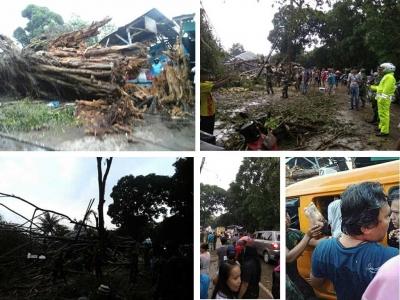 Pohon Beringin Besar Tumbang di Bandung Barat
