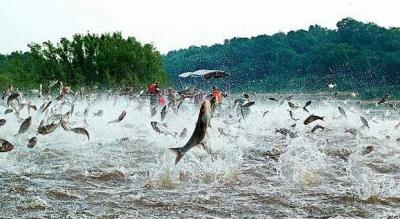 Lezatnya Ikan-ikan Endemik Indonesia