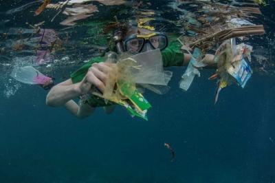 Peneliti: Cacing Lilin Menjadi Harapan untuk Mengatasi Polusi Plastik