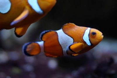 Mengapa Spesies Laut Memakan Sampah Plastik?