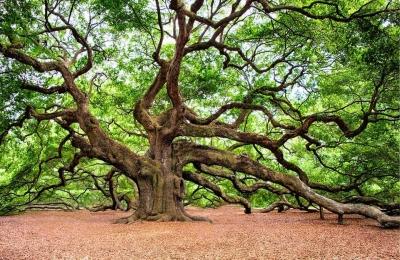 Refleksi Pohon untuk Muslim