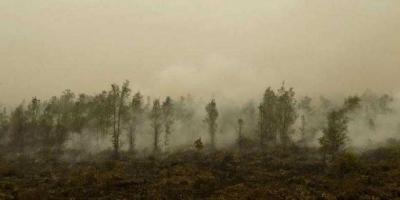 Musim Kemarau Tiba, Waspada Terjadi Kebakaran Lahan dan Kekeringan