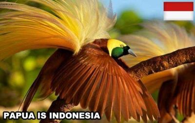 Jaringan Organisasi Papua Merdeka Tunjuk Kuasa Hukum Bermarkas di New York