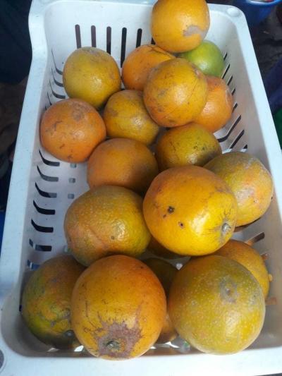 Jeruk Kalimantan Segarkan Stasiun Tanah Abang