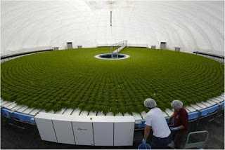 Bersahabat dengan Lingkungan Melalui Sistem Pertanian Berkelanjutan
