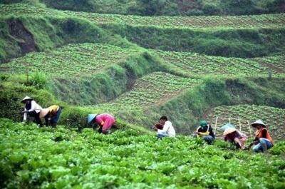 Keindahan Alam yang Dihasilkan dari Pertanian di Modoinding