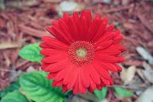 Bunga di Taman Hati