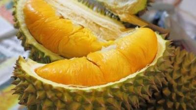 Durian Menjadi Buah Primadona dari Indonesia (King of Fruits)