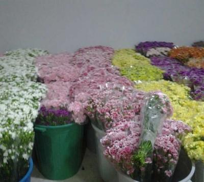 Kenaikan Dolar Menguntungkan Petani Bunga di Antalya, Turki