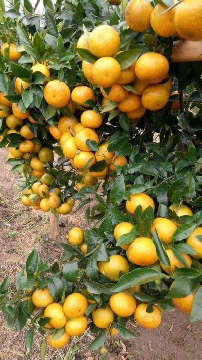 Tubuh Butuh Vitamin Jeruk? Simak Manfaat Jeruk Bagi Kesehatan