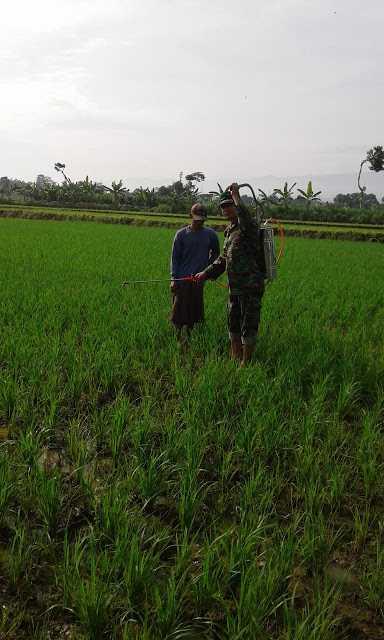 Tentara Turun Sawah, Dongkrak Swasembada Pangan