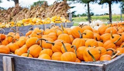Ini Manfaat Makanan Berwarna Oranye untuk Tubuh, Konsumsi Rutin Yuk!