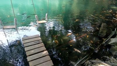 Ikan-ikan Menari