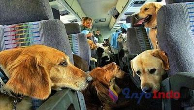 Lucu! Seorang Pemuda Membawa Anjing ke Dalam Pesawat