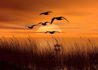 Puisi | Pada Sekawanan Burung-burung
