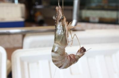 Surganya Pecinta Seafood