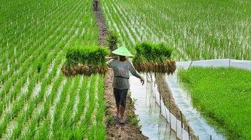 Catatan, Refleksi, dan Evaluasi Akhir Tahun Pertanian