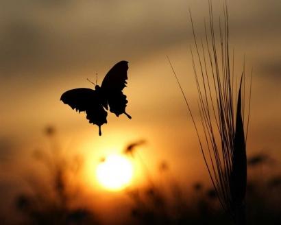 Puisi   Kupu-kupu Bersayap Jingga