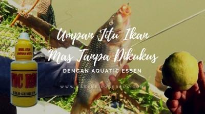 Rekomendasi Umpan Jitu Ikan Mas Tanpa Dikukus Paling Ampuh