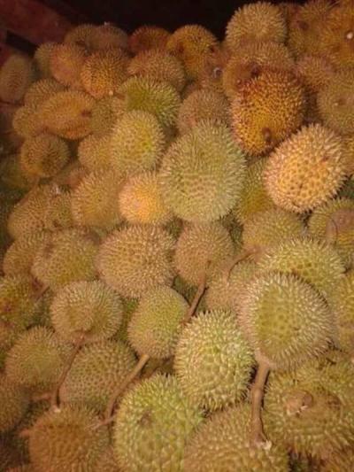 Maksumay, Nenek Hutan (Saat Musim Durian)