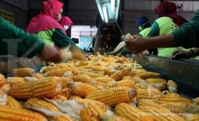 Menanti Audit BPK dalam Dugaan Korupsi Pertanian di Banten
