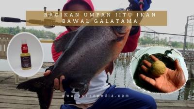 Racikan Umpan Jitu Ikan Bawal Galatama Paling Ampuh