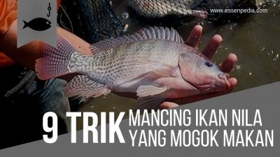6 Cara Mancing Ikan Nila yang Sedang Mogok Makan