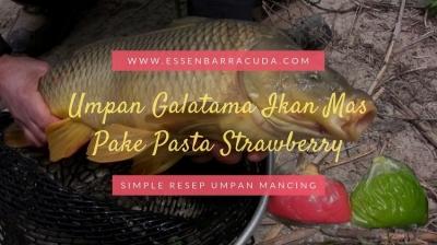 Resep Umpan Galatama Ikan Mas Pake Pasta Strawberry MANTAP