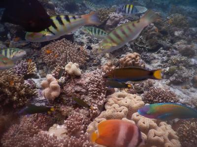 Keindahan Biota Laut di Pantai Lubang Buaya dan Keindahan Alam di Pantai Batu Kapal, Maluku Tengah