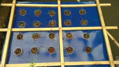 Tim KKN Undip Edukasikan Cocok Tanam dengan Metode Hidroponik Pasif
