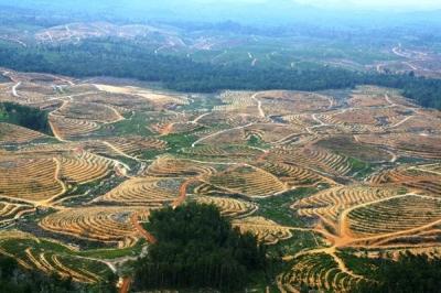 29 Taipan Kuasai 5 Juta Hektar Tanah Air