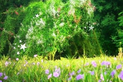 Mencari Kerajaan Peri di Taman Harmoni