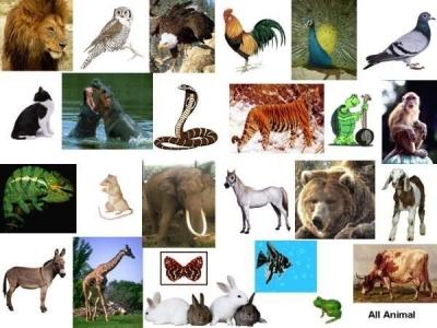 Dunia Binatang di Kampanye Kita