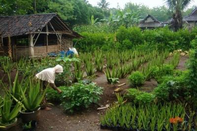 Tumbuhnya Kampung Wisata di Yogyakarta