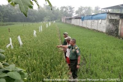 Motivasi Petani, Ini Yang Dilakukan Babinsa Koramil 0815/14 Dlanggu