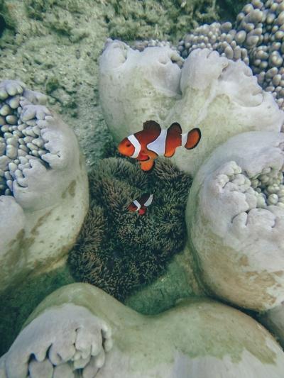 Tanjung Karang Donggala, House Reef Terindah Sulawesi Tengah