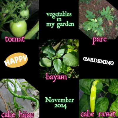Mari Berkebun Sayuran