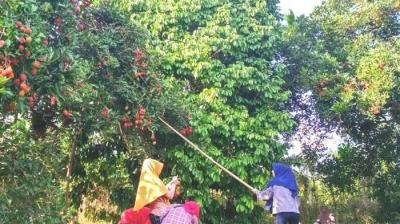 Ketika Buah-buahan Jadi Senjata Pamungkas Sultan Aceh Perangi Portugis