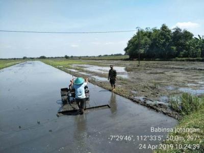 Kawal Percepatan Tanam, Babinsa Koramil Mojosari Dampingi Petani Bajak Sawah