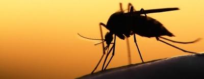 Hati-hati, Jawa Barat Masih Rawan Vektor Nyamuk