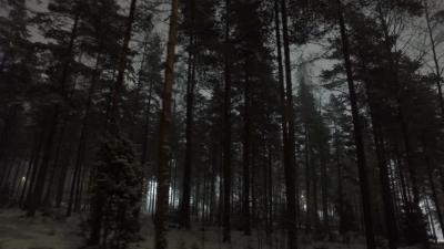 Rumah Berhantu yang Mengancam di Black Forest