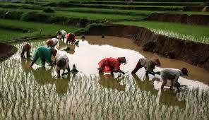 Generasi Milenial Tidak Tertarik Bekerja di Sektor Pertanian, Mengapa?