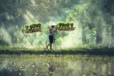 Milenialisasi Pertanian, Rebranding Menuju Pembangunan Pertanian Berkelanjutan