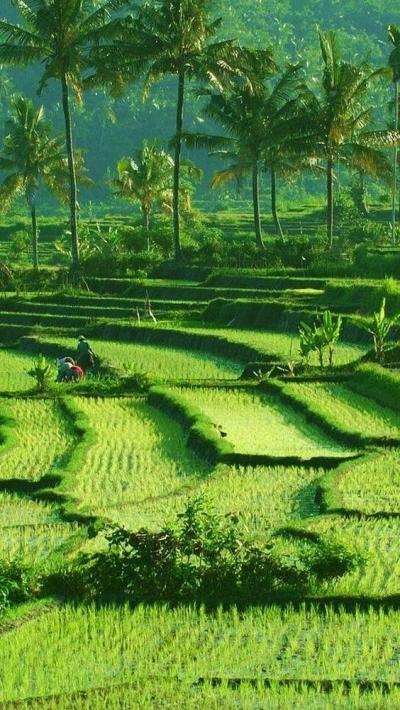 Pesan Menkeu Sri Mulyani untuk Memajukan Pariwisata Indonesia