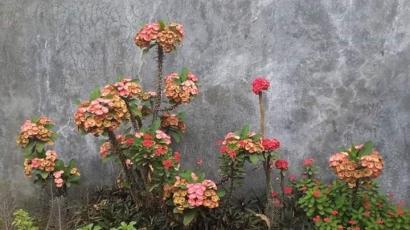 Aneka Bunga di Halaman Rumah Ibu (Part 3)