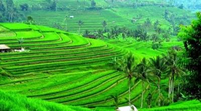 Mendesain Kemajuan Pertanian Indonesia untuk Indonesia Negara Maju