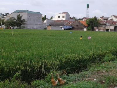 "Supaya Pertanian di Indonesia ""Awet Muda"""